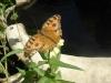 Butterfly Garden Restaurant Siam Reap