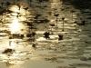 Sunrise Angkor Wat