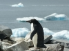 antartica_ocean_nova-13