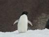 antartica_ocean_nova-14
