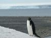 antartica_ocean_nova-17