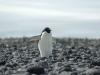 antartica_ocean_nova-19
