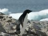antartica_ocean_nova-20