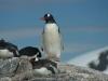 antartica_ocean_nova-34