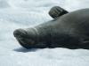 antartica_ocean_nova-35