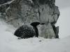 Spigot Peak