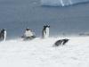 antartica_ocean_nova-51