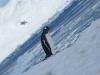 antartica_ocean_nova-64