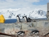 antartica_ocean_nova-67