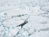 antartica_ocean_nova-7