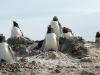 antartica_ocean_nova-92