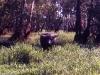 australien_kakadu_nationalpark_14