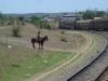 Cuba, train, dsc03444