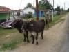 Cuba, Vinales, dsc04033
