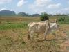 Cuba, Vinales, dsc04065