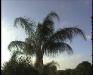 roundtrip_florida-16