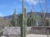 Mexico, cimg0532