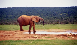 south_africa-55