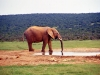 south_africa-19