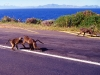 south_africa-6
