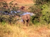 south_africa-75
