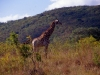 south_africa-80