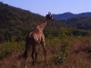 south_africa-90