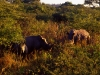 south_africa-92