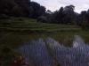 Chiang Mai, Rice Field