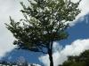 Tierra del Fuego Ushuaia 11