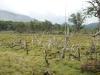 Tierra del Fuego Ushuaia 03
