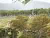 Tierra del Fuego Ushuaia 04