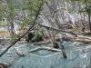 Tierra del Fuego Ushuaia 44