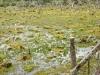 Tierra del Fuego Ushuaia 05