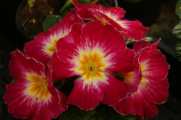 Flower Power dank Wer wird Millionär